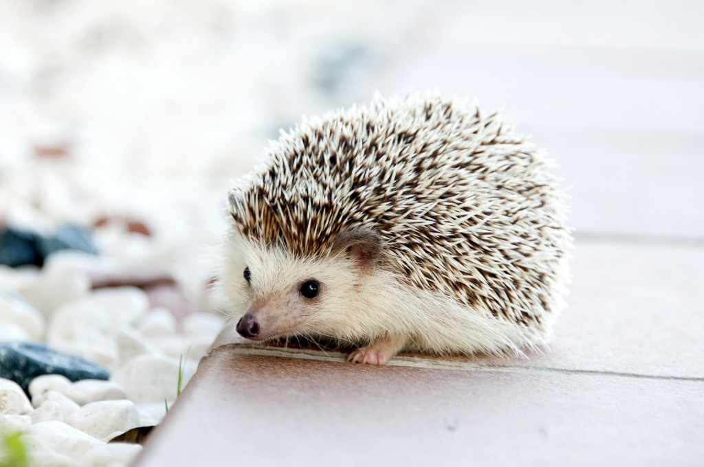 No matter how adorable your dog - or your tiny hedge hog - movers are not allowed to transport live animals. Make sure you make alternative arrangements on moving day for your pets.